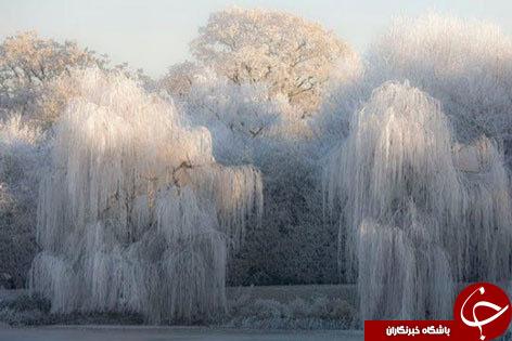 عجیبترین  غریبترین پدیده هایی که فقط در زمستان دیده میشوند!