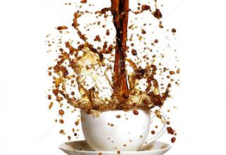عجیبترین کافیشاپی که تاکنون دیدهاید!+تصاویرکافی شاپی مخصوص حیوانات با نوشیدنی و غذای رایگان+تصاویر