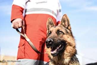 مرکز آموزش و نگهداری سگهای زنده یاب
