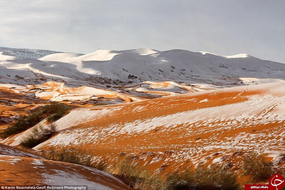 بارش برف در صحرای آفریقا برای سومین بار در 40 سال گذشته +تصاویر