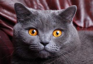 گربه ای که فریاد یک خانواده را در آورد+فیلم