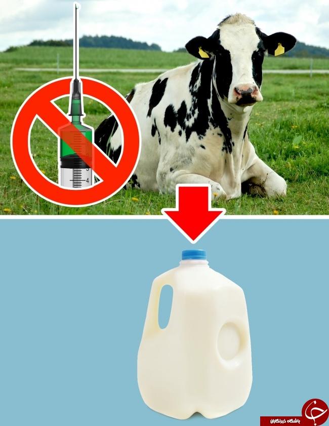 محصولات و غذاهایی که در برخی کشورها ممنوع هستند +تصاویر
