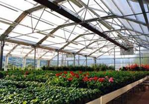 رونق تولید و صادرات گل و گیاه زینتی در عباس آباد