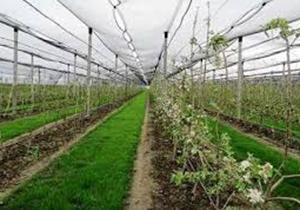 راه اندازی روستاها و شهرکها گلخانهای در فارس