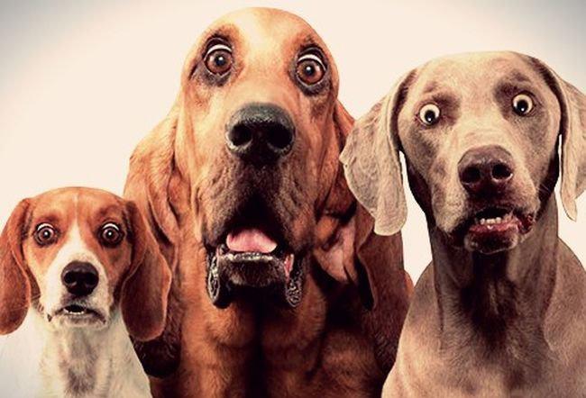 خطرناکترین غذایی که یک سگ قصد خوردن آن را داشت+فیلم
