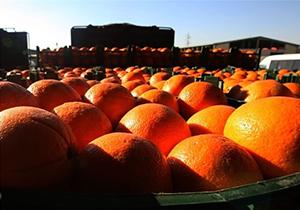 ذخیره سازی میوه شب عید در فارس آغاز شد