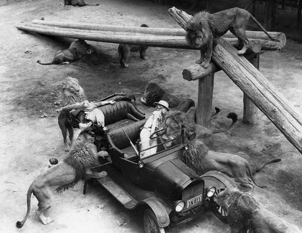 کدام حیوانات در دهه 40 میلادی با بازیگران هالیوود همبازی بودند؟ + فیلم و تصاویر