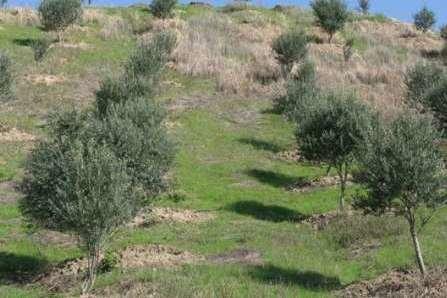 احداث باغ در اراضی شیبدار با هدف جلوگیری از فرسایش خاک