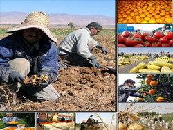 فضای نامناسب صادراتی و کمبود سرمایه گذاری چالش اصلی بخش کشاورزی است