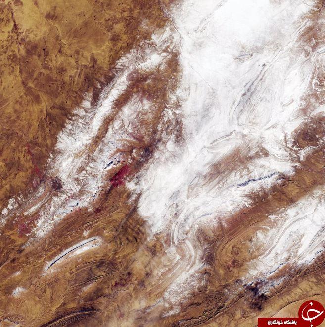 تصاویر روز: از بارش نادر برف در صحرایی در الجزیره تا مبارزه ماموران قرنطینه با آنفولانزای مرغی