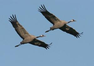احیای بختگانم آرزوست/دانه ریزی دریاچه بختگان برای کمک به پرندگان مهاجر