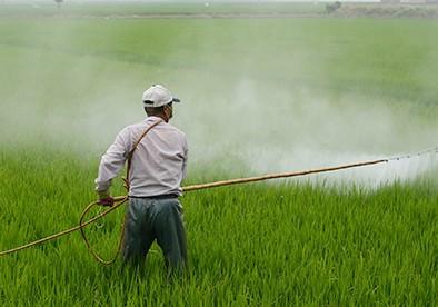آغاز سمپاشی مزارع گندم و جو در هندیجان