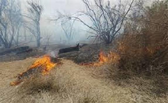 باشگاه خبرنگاران -آتش سوزی در پارک ملت سنندج