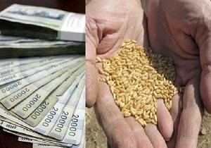 رئیس خانه کشاورز قم: نرخ خرید تضمینی محصولات کشاورزی تاکنون اعلام نشده است/بحران کشاورزی در قم