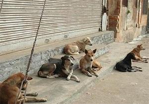 گزارشی از سگهای زنده یاب ایران