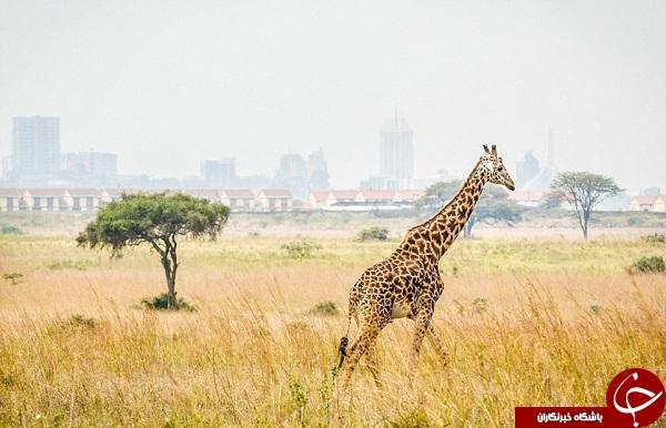 10 مکان برتر جهان که برای گردشگری توصیه میشوند + تصاویر