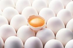 ثبات نرخ تخممرغ در بازار/ سازمان تعزیرات با گران فروشان برخورد کند