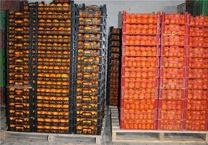 40 هزارتن مرکبات برای شب عید ذخیره سازی می شود