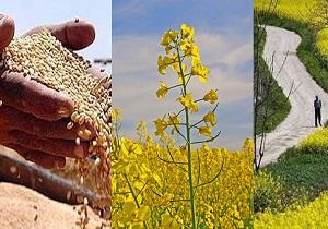 باشگاه خبرنگاران -افزایش تولید محصولات زراعی در سال های اخیر