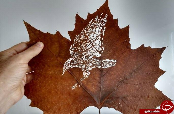 نقاشی های خارق العاده هنرمند ایرانی روی برگ درختان