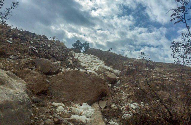 نتیجه تصویری برای تخریب 500 لاشه مرغ در طبیعت/ سازمان دامپزشکی مسئول دفن لاشهها است