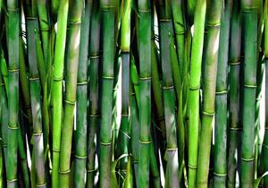 نتیجه تصویری برای کاربرد های گیاه بامبو: