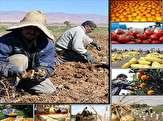 باشگاه خبرنگاران - فضای نامناسب صادراتی و کمبود سرمایه گذاری چالش اصلی بخش کشاورزی است
