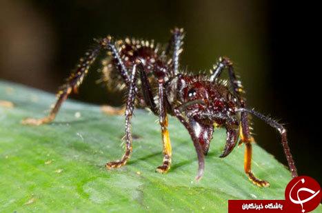 وحشتناکترین حشرات دنیا