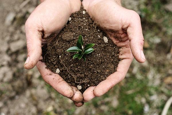 نابودی سالانه 2 میلیارد تن خاک در کشور