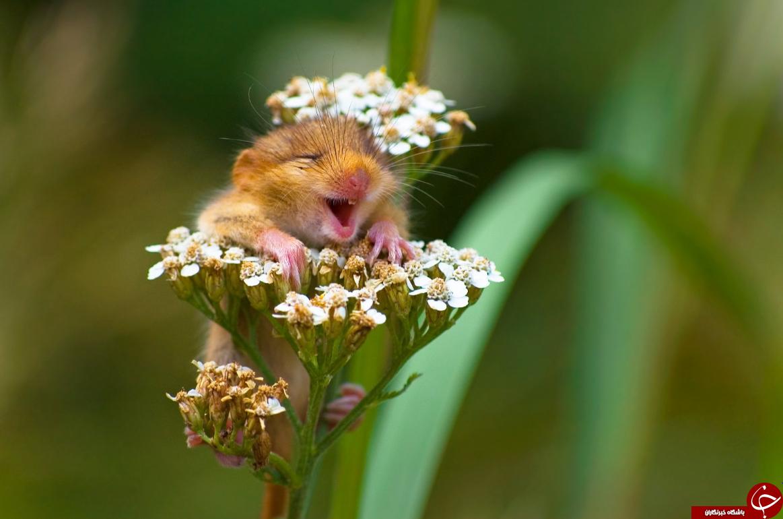 خنده دارترین تصاویری که از حیوانات در سال 2017 منتشر شد+ تصاویر