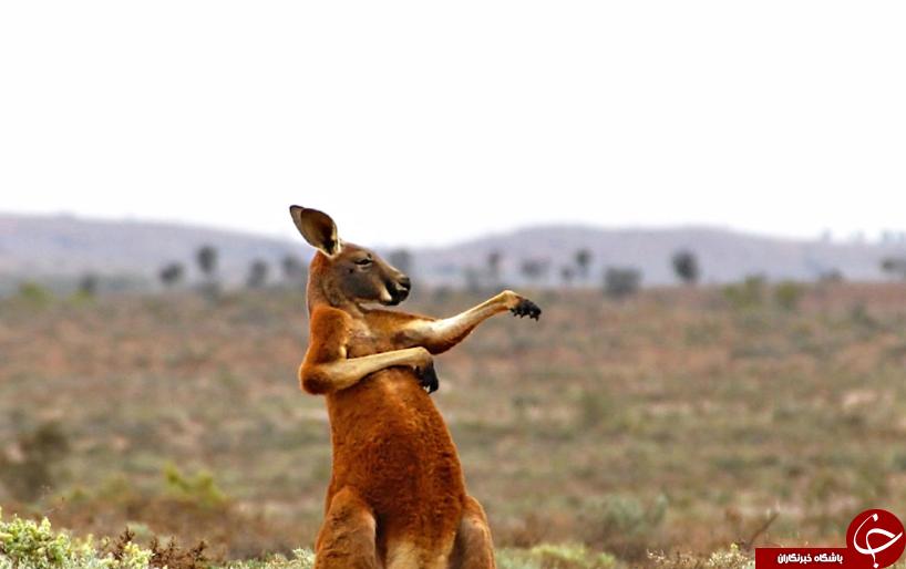 خنده دارترین تصاویری که از حیوانات در سال ۲۰۱۷ منتشر شد+ تصاویر
