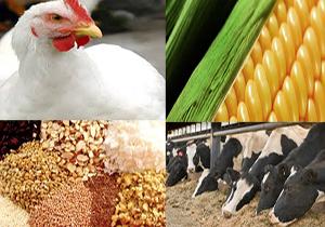آخرین قیمت نهاده های دامی و کشاورزی