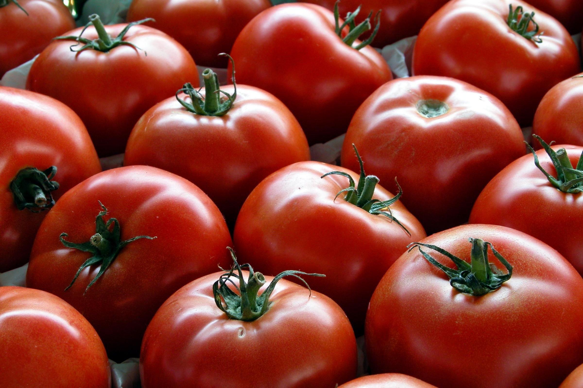 گوجه فرنگی سکان دار گرانی/ نرخ هر کیلو گوجه فرنگی به ۴ هزار تومان رسید