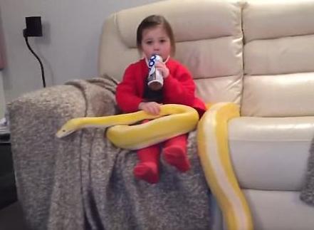 وابستگی عجیب دختر خردسال و یک مار پیتون به یکدیگر+فیلم