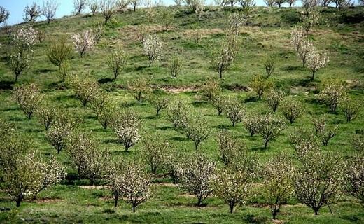 توسعه باغات در اراضی شیبدار استان سمنان / پیروزی شهرداری دامغان در لیگ برتر ووشو