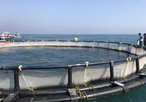 ذخیره سازی ۸۰۰ هزار بچه ماهی در سد کارون چهار