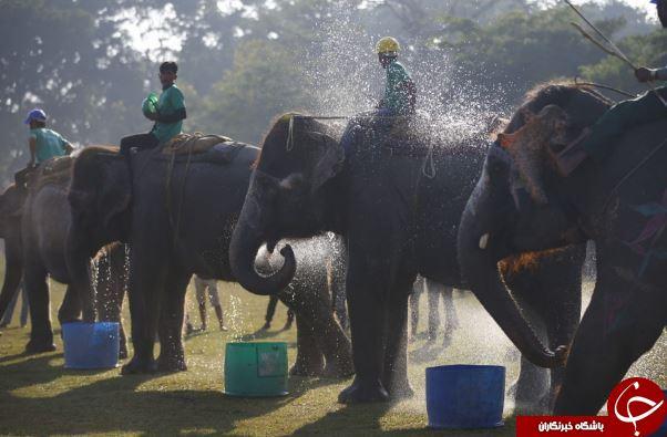 تصاویر روز: از آب نوشیدن فیل ها در نپال تا عکس یادگاری ولادیمیر پوتین با کودکان