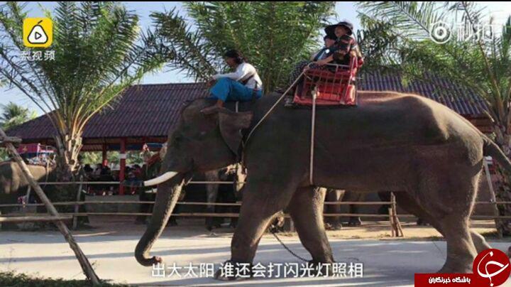 بازی با دم فیل، پایان زندگی راهنمای تور گردشگری را رقم زد+ تصاویر