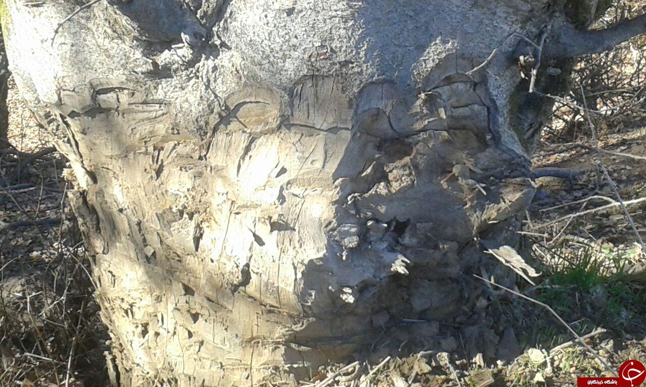 نابودی منابع طبیعی در «عرب لالهگون» + تصاویر