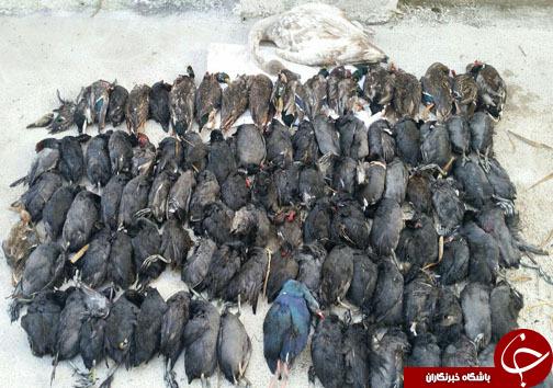 ۱۵ شکارچی متخلف در دام محیط بانان مازندران