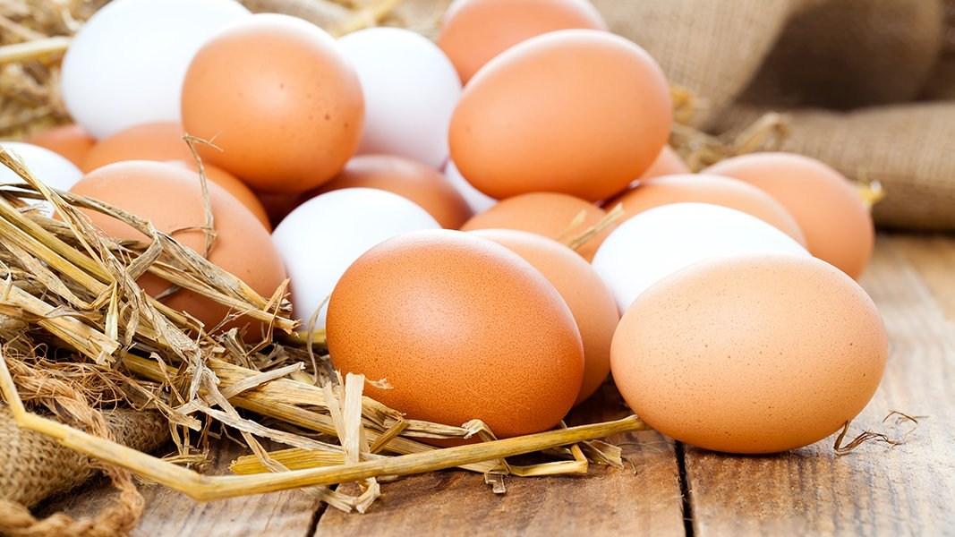 دلايل افزايش قيمت تخم مرغ چيست؟