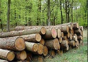 كشف بیشتر از ۱۳ تن چوب قاچاق