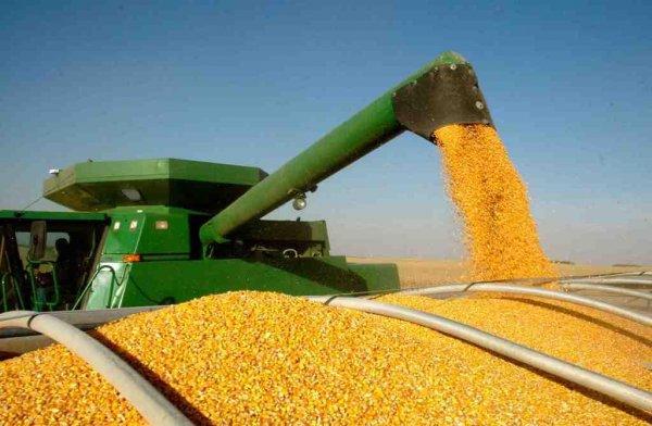 تولید بیش از 9 هزار تن ذرت دانه ای از مزارع گتوند