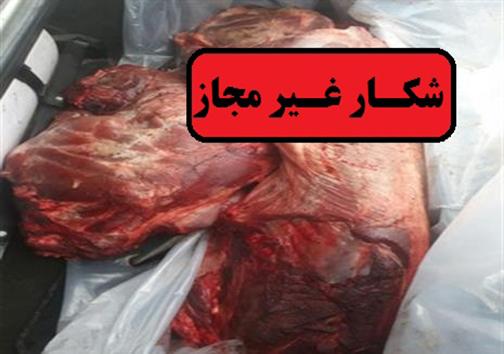 دستگیری عاملین کشتار دو خوک وحشی در کوهدشت