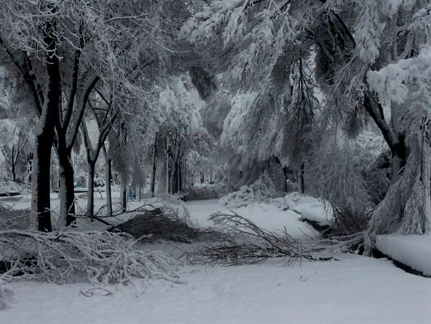 چرا کمر درختان تهران زیر برف شکست؟