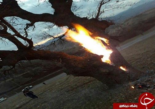 دستگیری شکارچیان سنجاب ایرانی و عاملین آتش زدن درختان زاگرس +تصاویر