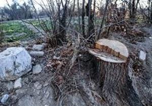 سارقان تنه درختان گردو در قم به دام افتادند