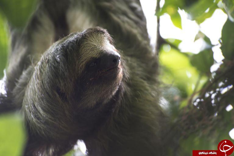 کندترین حیوانات جهان+تصاویر