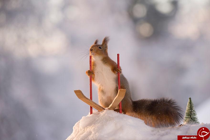 المپیک زمستانی سنجابها