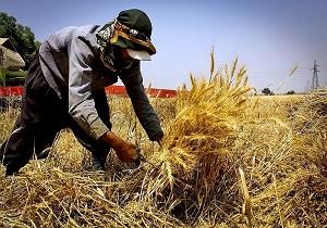 کشاورزی محور استقلال و توسعه کشور/ خودکفایی گندم دستاورد سالها برنامهریزی